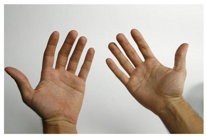 Primer portátil con autenticación por biometría vascular