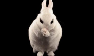 El ransomware Bad Rabbit tiene implementando un exploit de la NSA