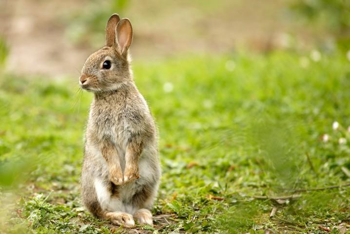 Bad Rabbit, el nuevo ransomware que podría seguir la senda de WannaCry y NotPetya