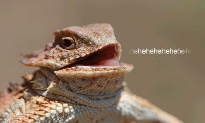 Lizard Squad sigue activo y actúa ahora también bajo otro nombre: BigBotPein