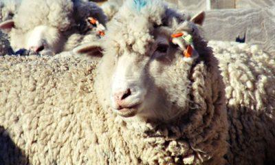 Diario de Troya #4: El ransomware que dejó a Australia sin lana 31