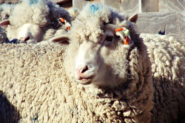 Diario de Troya #4: El ransomware que dejó a Australia sin lana 55