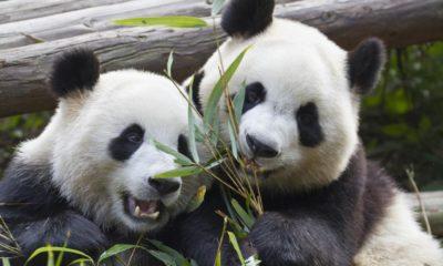 Panda Security busca un comprador que la quiera 66