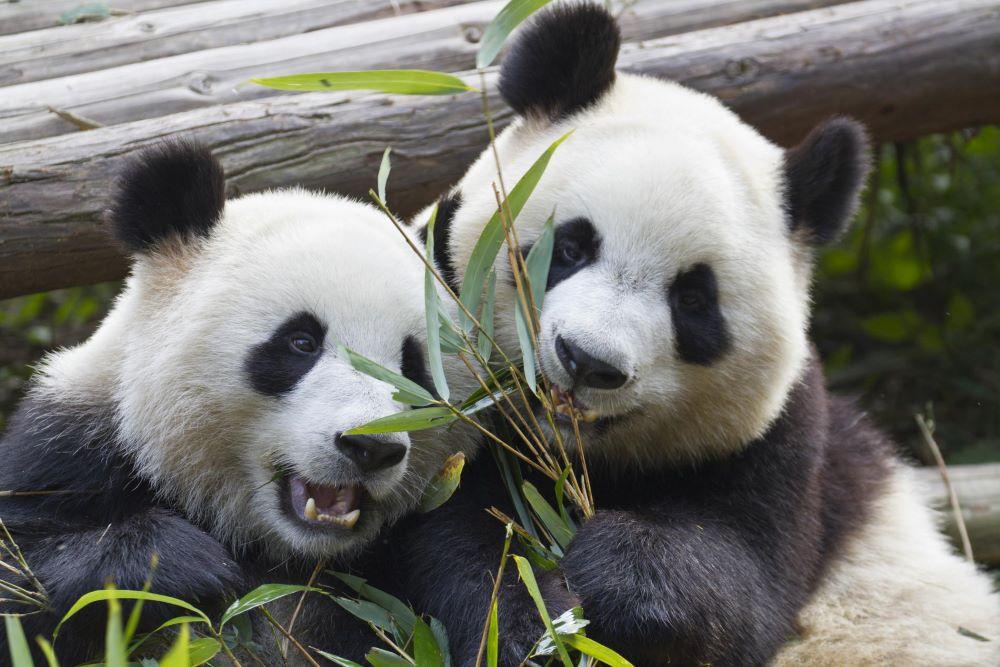 Panda Security busca un comprador que la quiera 48